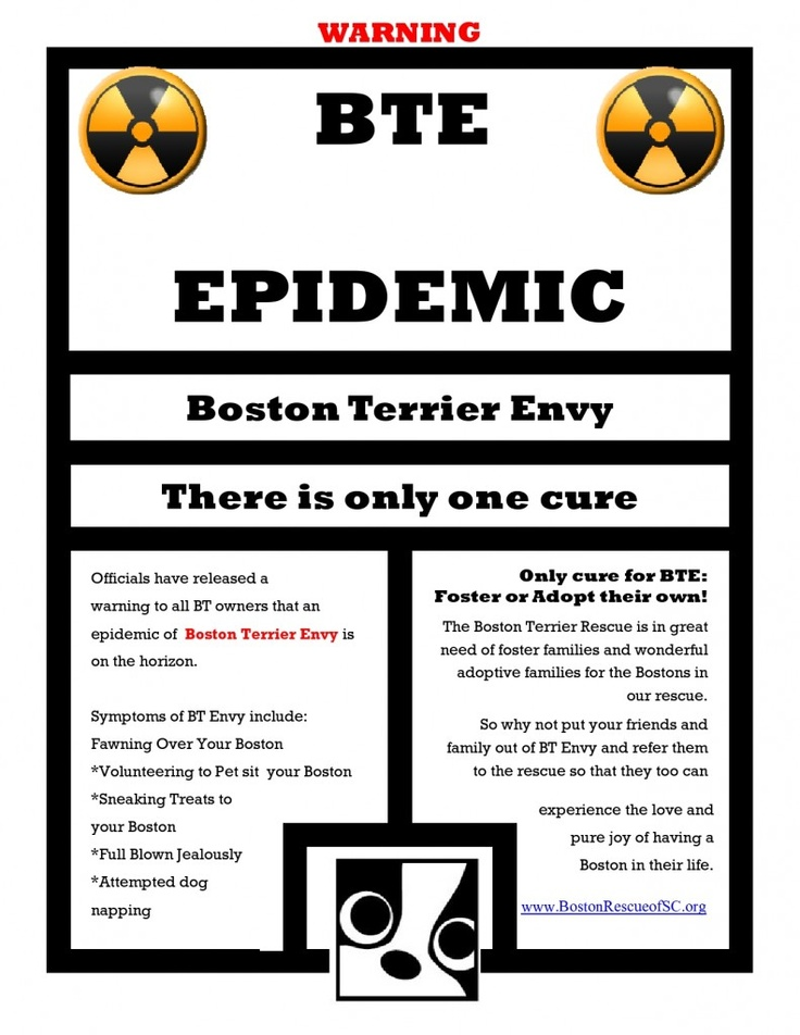 Boston Terrier Rescue