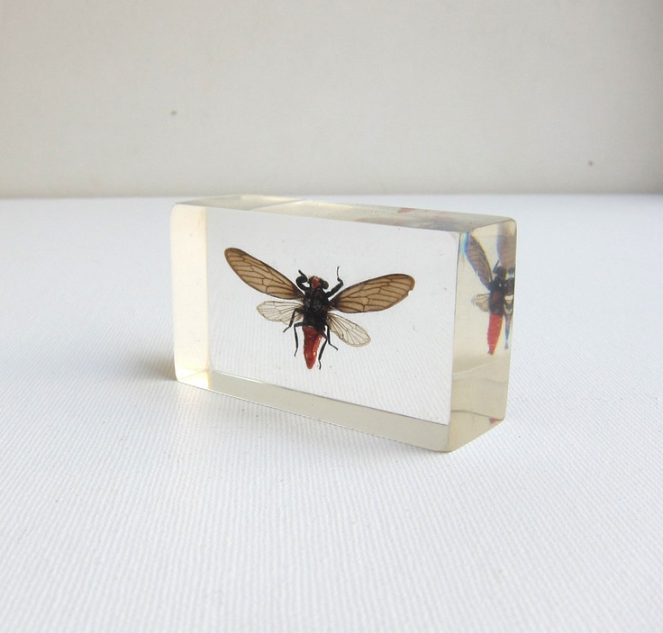 Insect bug cicada specimen embedded in clear lucite acrylic resin block paperweight. $15.00, via Etsy.
