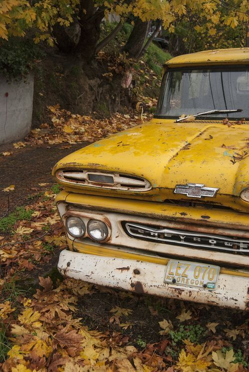 Rustic old Chevy pickup, heart warming fall season, Autumn leaves, Vintage, Antique, The 50's, Oregon Plates