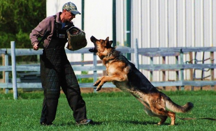 Pin By Dogs Cool Puppy Photos Dog On Dog Training Tips Dog