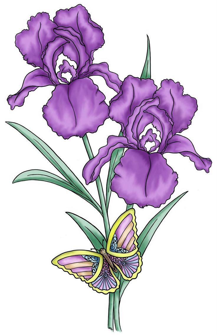 Flower CLIP ART IMAGES Pinterest Irises, Iris