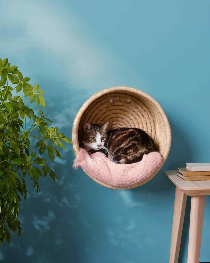 hanging cat basket with white and gray cat …