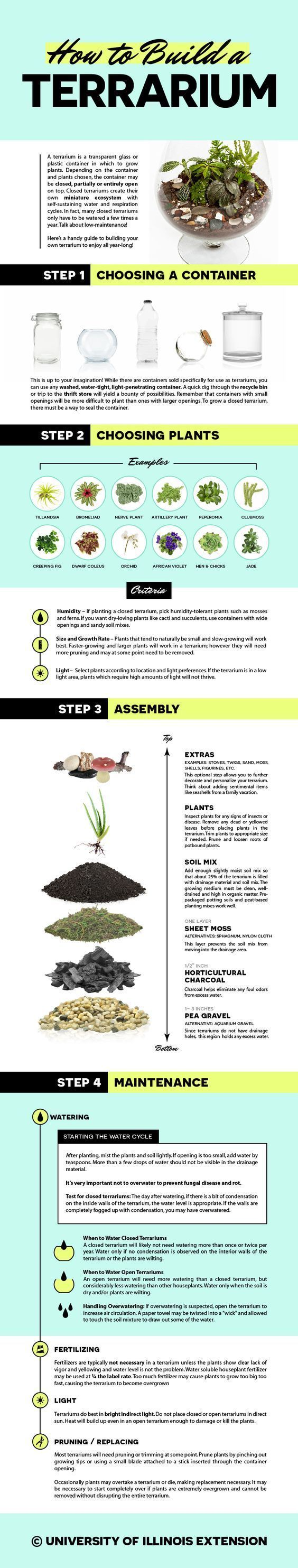 How to Build a Terrarium — fun, kid-friendly DIY garden project! Not to mention, incredibly low-maintenance. www.containerwatergardens.net/create-fascinating-carnivorous-terrarium/