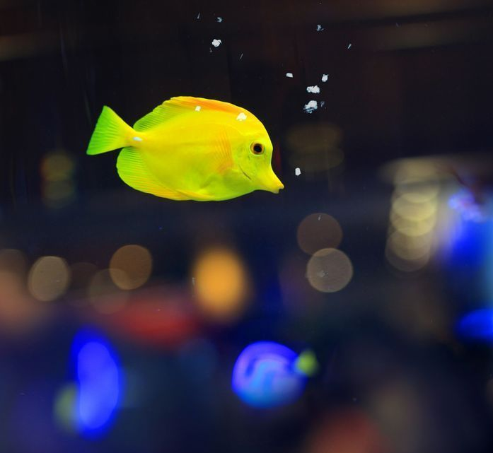 1000 Images About Colorful Tropical Fish On Pinterest