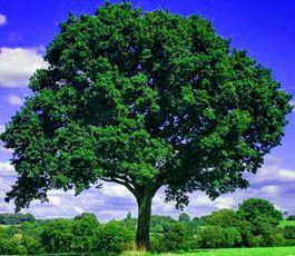 वन संरक्षण क्यों जरुरी है