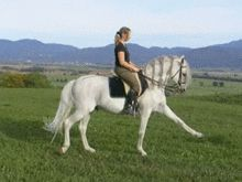 Jerez de la Frontera - Wikipedia, the free encyclopedia: The Royal Andalusian School of Equestrian Art.
