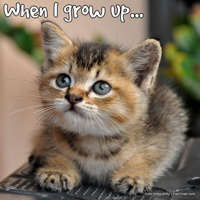 Best 25+ Super cute kittens ideas on Pinterest | Cute ...