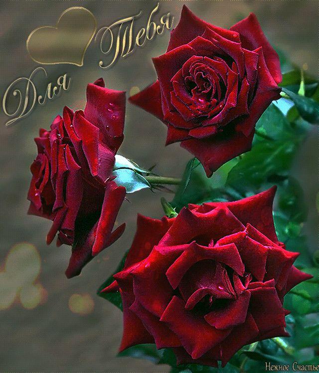 Цветов, дорогая цветы тебе открытка