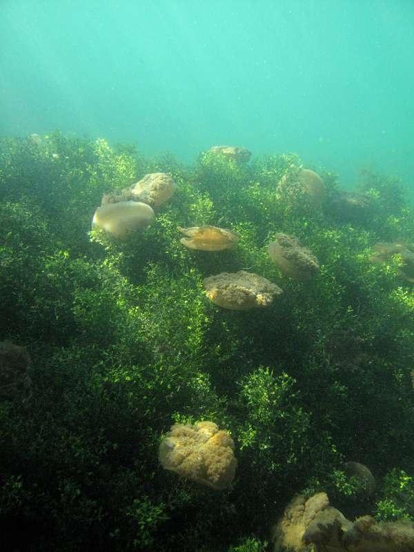 Kakaban Island , Derawan