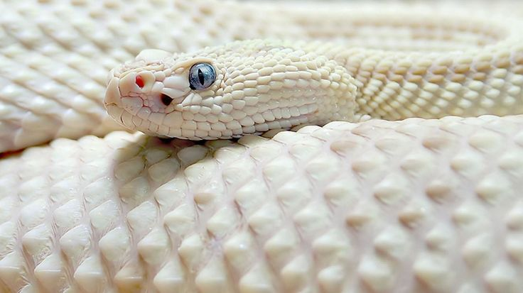 Exotic Snake APK Free Android Game download - Appraw