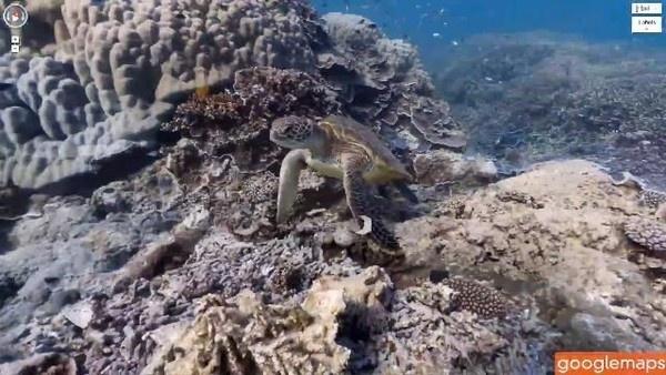 Take a deep sea dive on Google Maps Street View (Video): Maps Street, Google Maps, Google Seaview, View Videos, Googleseaview Google, Seaview Googleseaview, Street View, Ocean View, Mobiles Platform Google