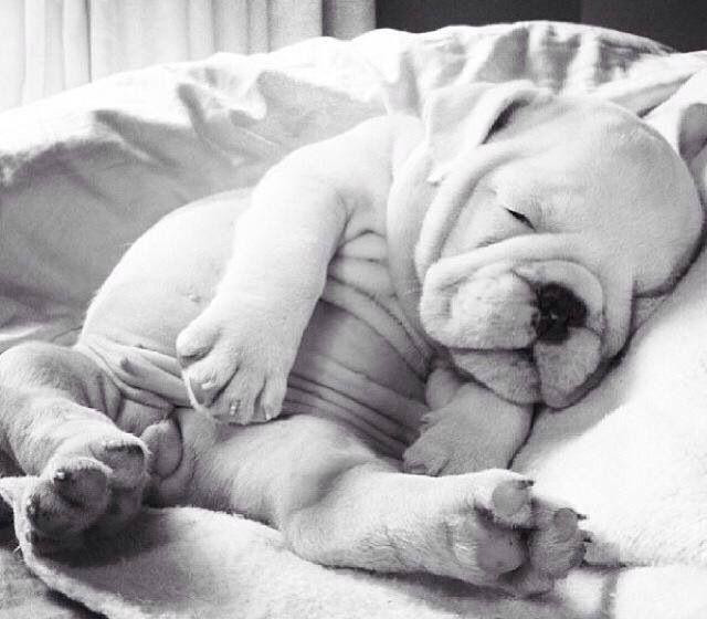 OMG! The cutest!!!