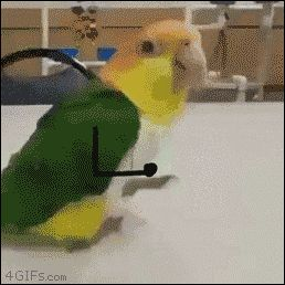 New trending GIF on Giphy. dancing happy party bird jumping celebrate. Follow Me CooliPhone6Case on Twitter Facebook Google Instagram LinkedIn Blogger Tumblr Youtube