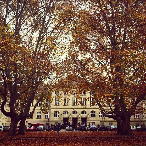 Fachhochschule Köln #cologneplaces #herbstinköln #köln #cologne #domstadt #nature #fall #autumn #herbst #city #kölscheecken #fhkoeln #trees #university #leaves #beautiful