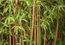 How to Propagate Bamboo from Cuttings | Home Guides | SF Gate