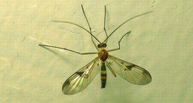 How to Kill Gnats? (Get Rid of Gnats)