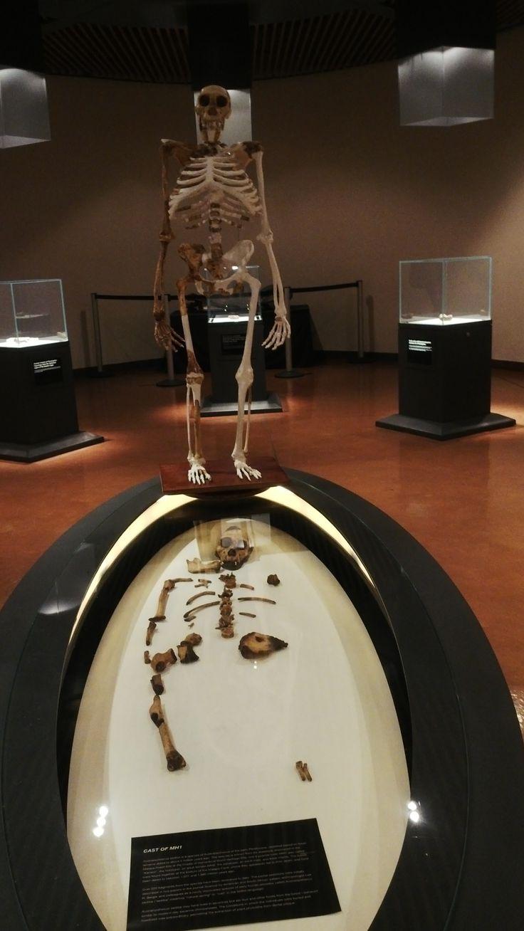 Human Skelton at #CradelOfHumankind #Maropeng #SouthAfrica