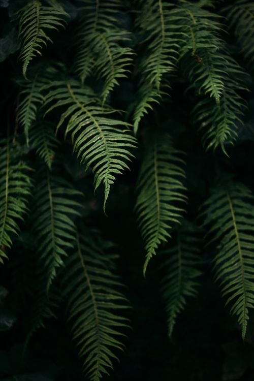 ferns, captured by Sonja Lyon Photography