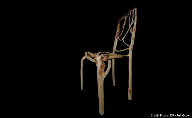 La première chaise de Gavin Munro