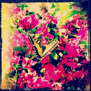 Butterfly. Tinos, Greece.Greek Isle
