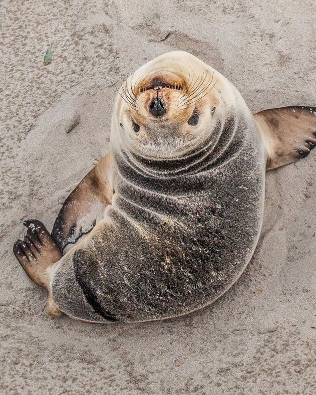 sweet seal #sea lion