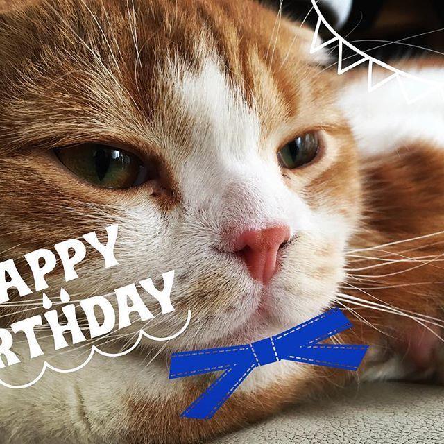 3月17日は、 我が家の一番下の弟 ベルくんの1歳の誕生日でした🎉 プレゼントはちゅ〜る!! すくすくと大きくなったな(笑) #スコティッシュフォールド #猫 #一歳 #ペット #愛猫 #親バカ #ベル#3月17日生まれ #一歳の誕生日 #誕生日 #happybirthday #ちゅ〜る