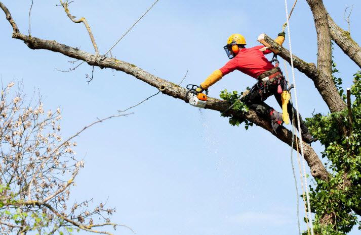Tree Removal Yarrawarrah Tree Removal Tree Service Tree Pruning