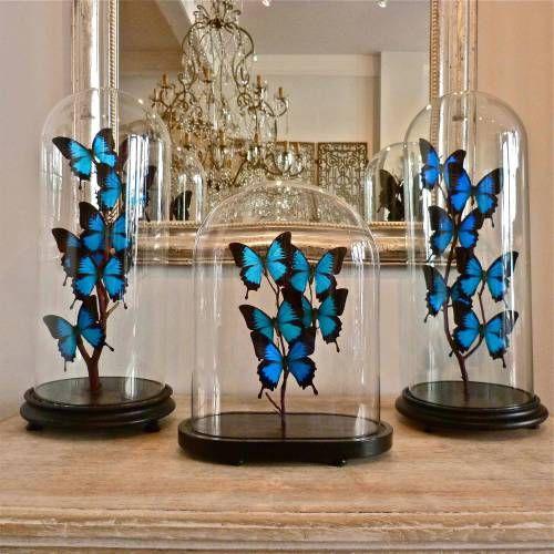 Butterflies domes