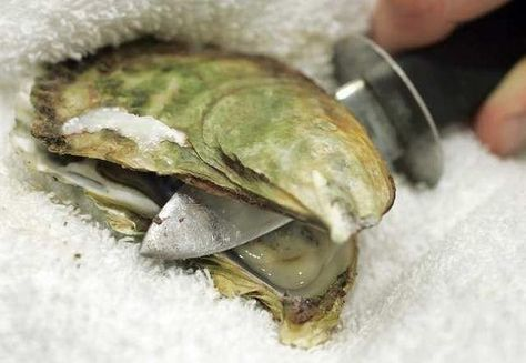 Shucking Oysters Tips Plus A Great Oyster Recipe