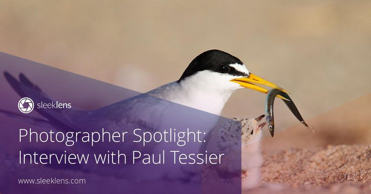 Time to get inspired with our photographer spotlight interview series! Paul Tessier is a photographer from the USA. Get to know all his tips and tricks.