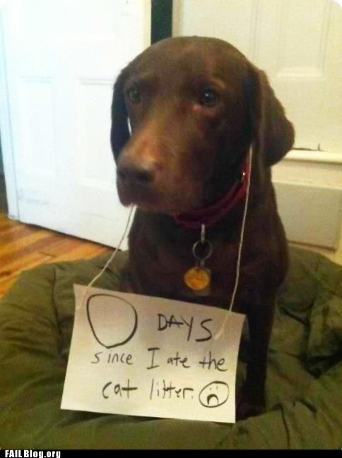 the penalty box...Cat Litter, Signs, Puppies, Dogs Cat, Pets, Dogs Shaming, So Funny, Bad Dogs, Animal