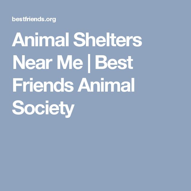 Animal Shelters Near Me | Best Friends Animal Society