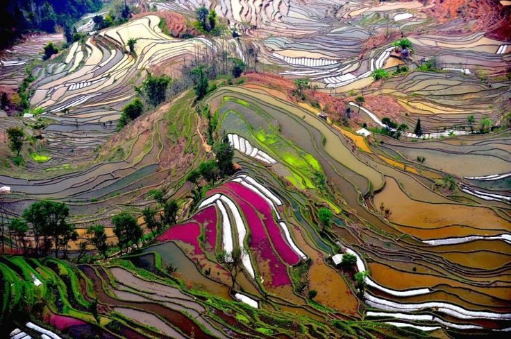 1. The rice fields of Yunnan, China.These PIctures Are Not Photoshopped