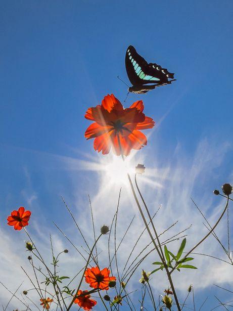 summer flower retro sunshine - photo #35