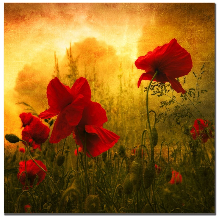 137 best Art - Poppies images on Pinterest | Poppies, Flower art and ...