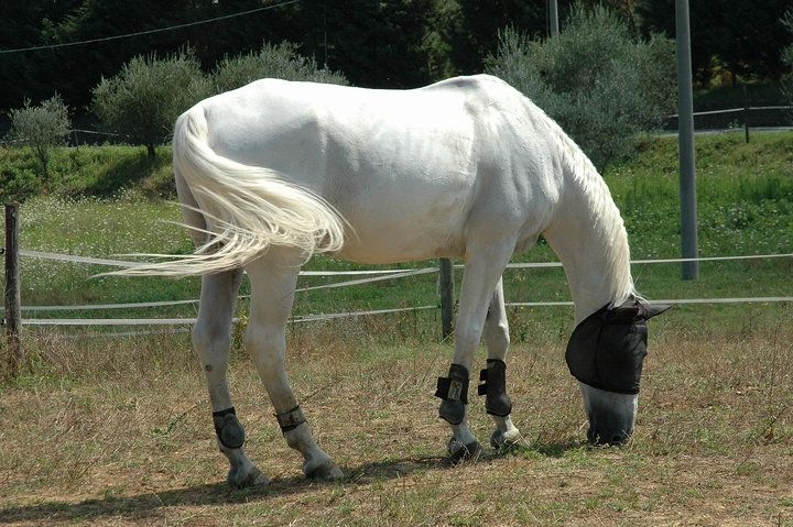 White horse, very gentle, 15 years old, about 168cm hight 500kg wight