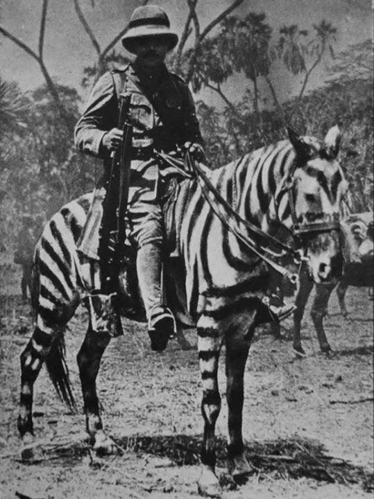 British soldier on a horse in zebra camouflage German East Africa during WWI.