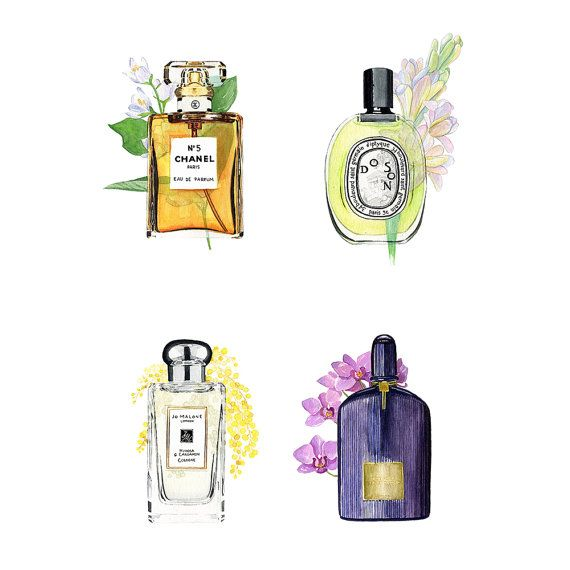 perfume illustration by Aleksandra Stanglewicz https://www.etsy.com/uk/listing/480728980/