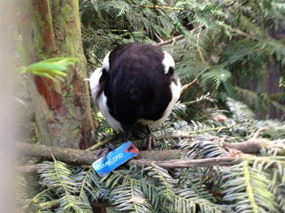 Bird has Tesco Clubcard