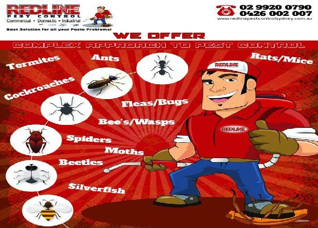 redlinepestcontrolsydney.com.au - The majority of the world's population suffers from the same hassle in #homes that are pests. These tiny nuisances are not to be taken lightly of as they are quite the thing in creating havoc in your #house. We all are pretty aware of what they can do but still some owners take it for granted.