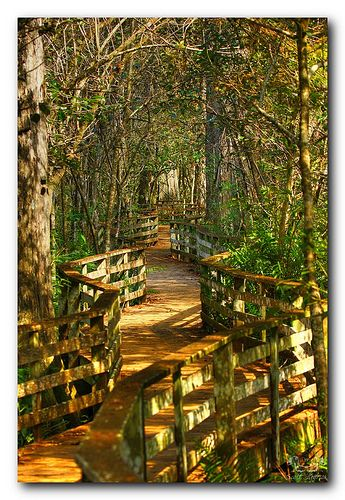 The Corkscrew Swamp Sanctuary has some of the best wilderness in Southwest Florida.