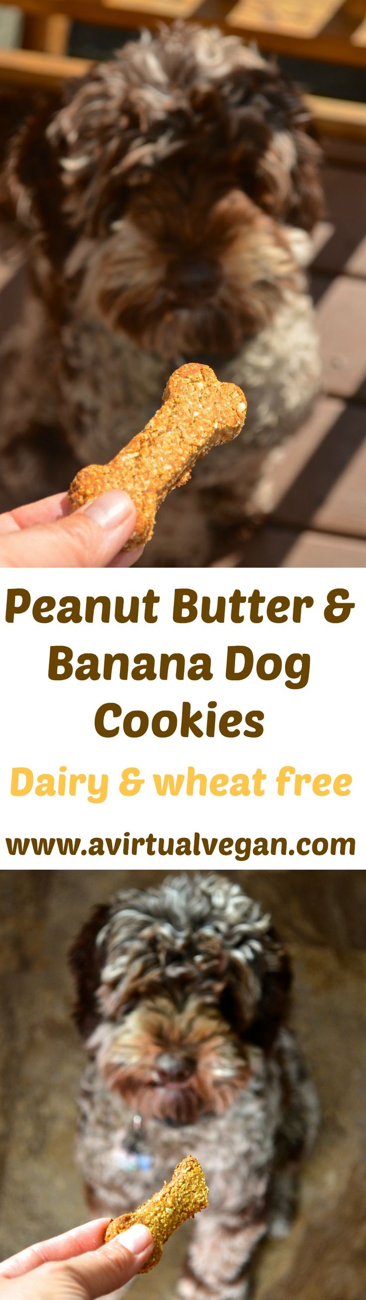 Get some tails wagging with these healthy 3 ingredient dog cookies. Full of peanut buttery goodness and officially taste tested & approved by Chester! Just 3 ingredients & dairy & wheat free!