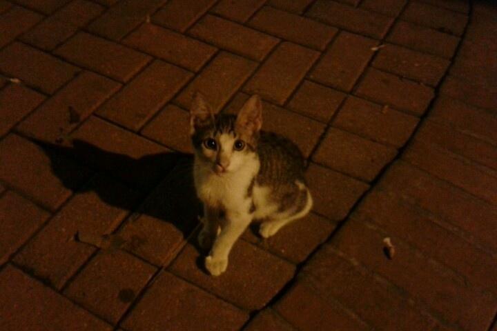 Gatito en la Avenida Primera