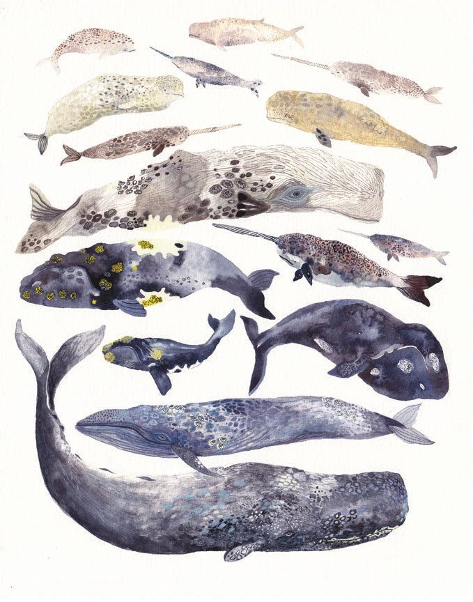 Whale Collection  16 x 20  Archival Print by unitedthread on Etsy, $60.00