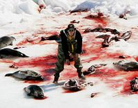 SIGN: Against Baby Seal Hunt in Canada! #Canada #Babyseals http://www.thepetitionsite.com/1/against-baby-seal-hunt/
