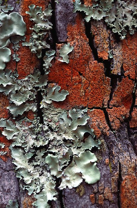 Lichen On Tree Bark by John Foxx with Pin-It-Button on FineArtAmerica