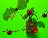 Www.etsy.com/CuckooKits Ladybug Kit.   Adorable! $20