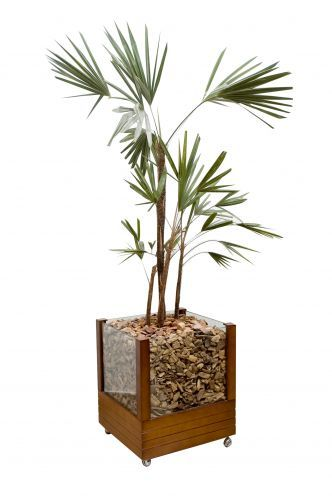 Plantas e vasos para interiores   Coloridos, lisos ou estampados. Seja qual for a textura e material empregado nos vasos, eles são os pri...