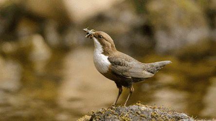 Tips Agar Burung Mau Makan Jangkrik | Budidaya