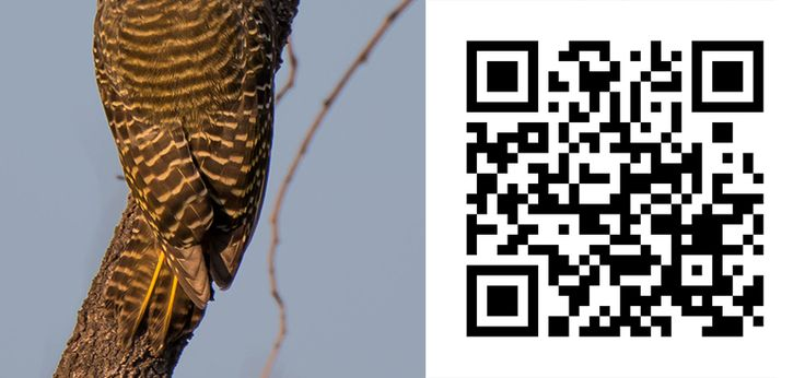 Guess the Bird 46 http://birdwatcher.co.za/guess-the-bird-46/